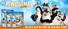 """Erfolgreicher Start der """"Mission: Pinguine"""""""